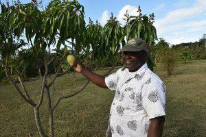 Antiguan farmer Cyril with Mango tree