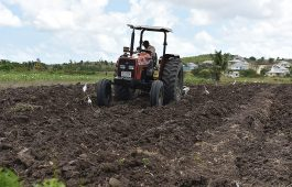 Farming in Antigua West Indies