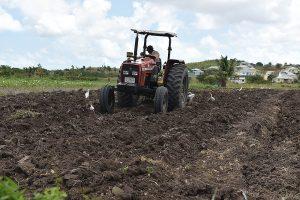 Farming in Antigua West Indies